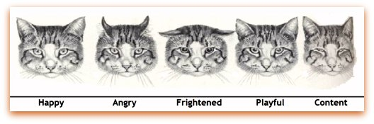 Image found @ http://www.mustlovecats.net/Cat-Communication.html